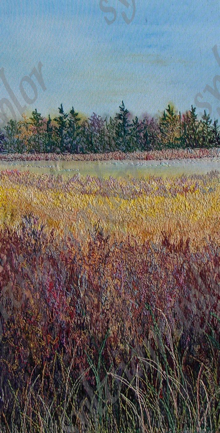 sunshine on the marshes (1).....