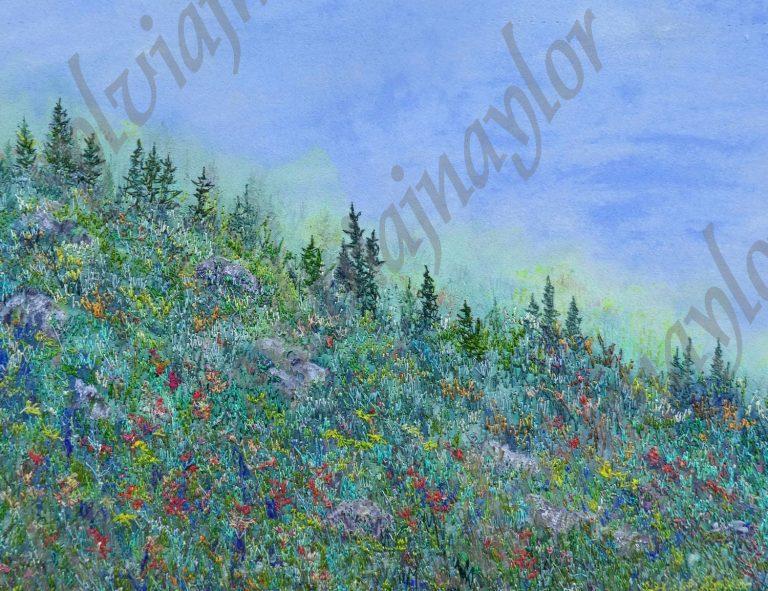 wild flowers on Edith Cavell